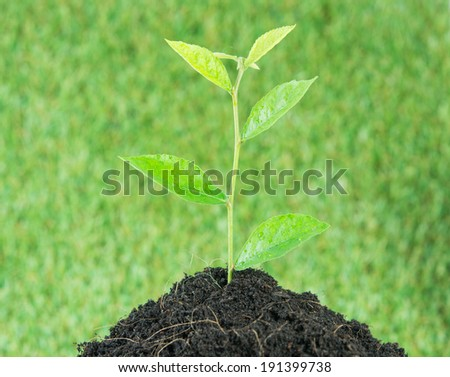 Young small new life green plant on over green background - stock photo