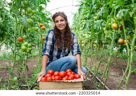 Young smiling agriculture woman worker and a crate of tomatoes in the front, working, harvesting tomatoes in greenhouse. - stock photo