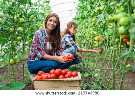 Young smiling agriculture woman worker in front and colleague in back and a crate of tomatoes in the front, working, harvesting tomatoes  in greenhouse. - stock photo