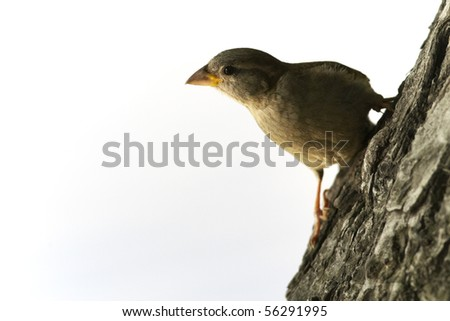 Young sparrow sitting on tree trunk