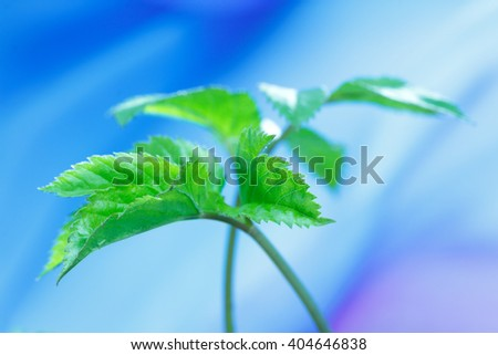 young spring leaves on a blue background - stock photo