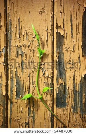Young sprout climbing on old wood  wall - stock photo