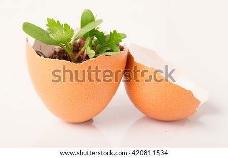Young sprout in a half of an egg shell. Symbol of origin and development of life and spring. Close up, small depth of sharpness. White background
