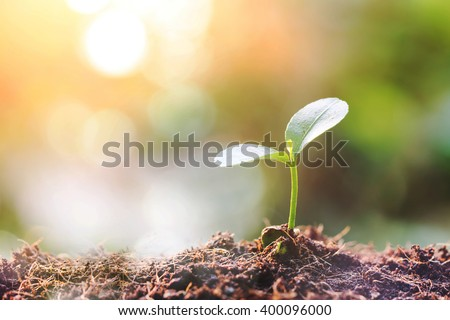 Young sprout in springtime - stock photo