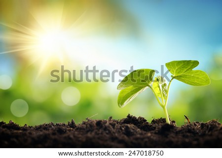 Young sprout in springtime,Closeup. - stock photo