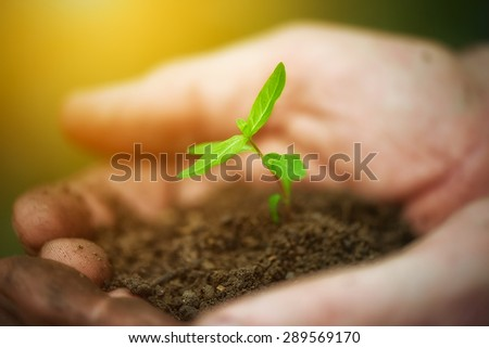 young sprout plants in old dirty hands, concept on green background - stock photo