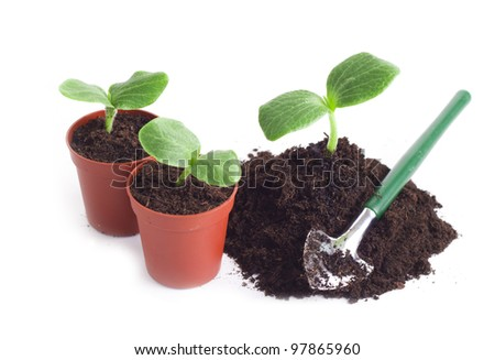Young sprouts in flowerpot and a shovel it is isolated on a white background - stock photo