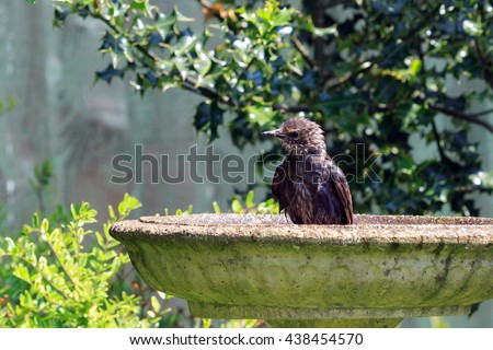 Bird Bath Stock Images Royalty Free Images Vectors Shutterstock