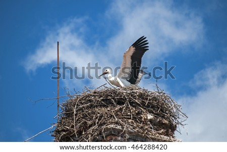 Young stork in nest built on brick chimney