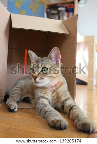 Young tabby cat in cardboard box - stock photo