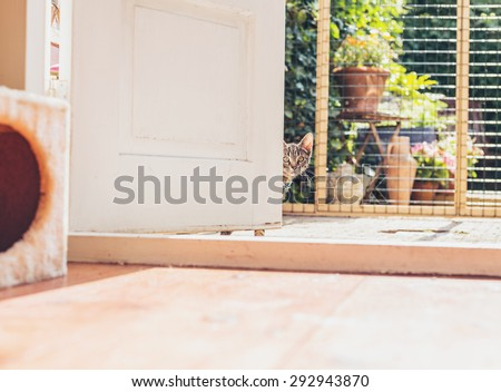 Young tabby kitten staring curiously around a white wooden door with just its face visible indoors in a house - stock photo
