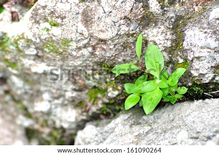 Young tree growing on piece of rock. selective focus, soft focus and shallow depth of fields - DOF - stock photo