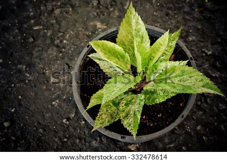 Young tree in the pots - stock photo