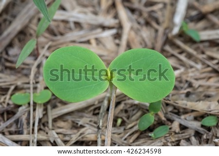 Young tree start growing on ground, new life of tree. - stock photo