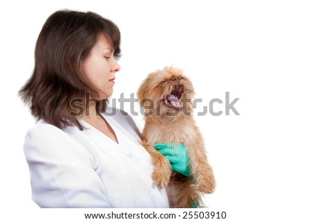 Young vet holds a dog in a clinic