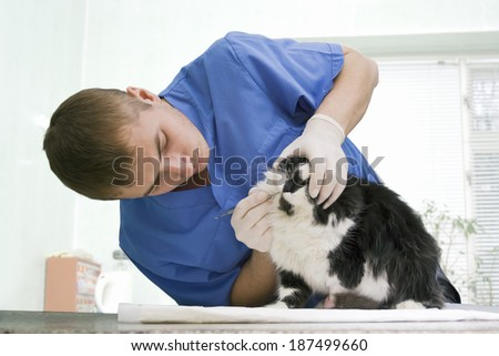 Young veterinarian examines a cat's teeth