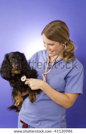 Young veterinarian on blue background with a dog - stock photo