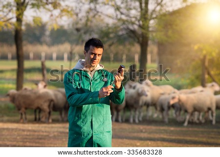 Young veterinarian preparing injection for sheep vaccination on farmland. Sheep herd in background - stock photo