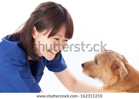 young veterinarian with Norfolk terrier dog - stock photo