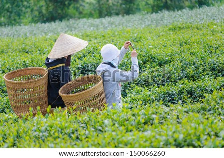 Young Vietnam tea pickers take picture with mobile phone near Bao Loc, Lam Dong, Vietnam - stock photo