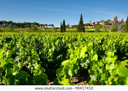 Young Vineyard in Southern France, - stock photo