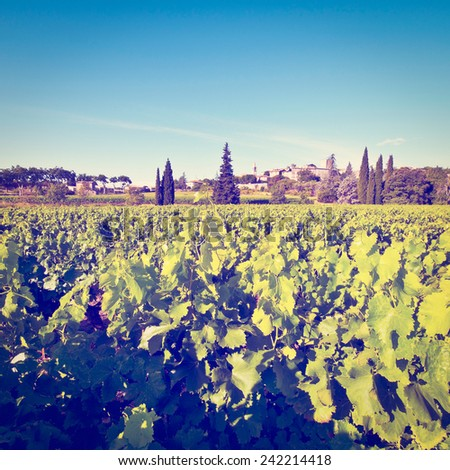 Young Vineyard in Southern France, Instagram Effect - stock photo