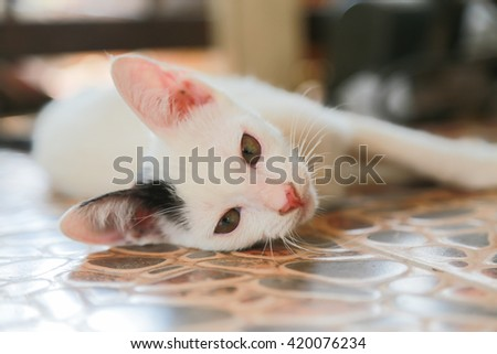 Young white cat laying on the floor