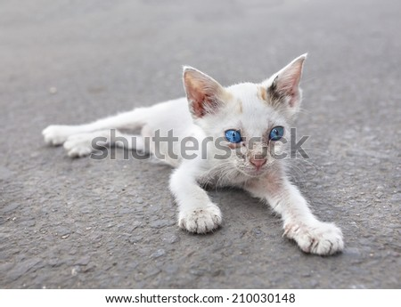 Young white cat with blue eyes on the street. - stock photo