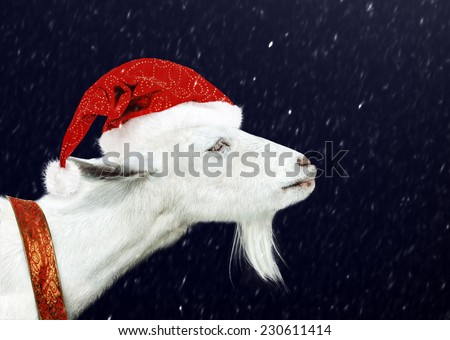 Young White goat wearing santa claus hat and christmas ribbon. New years night and snow flackes - stock photo