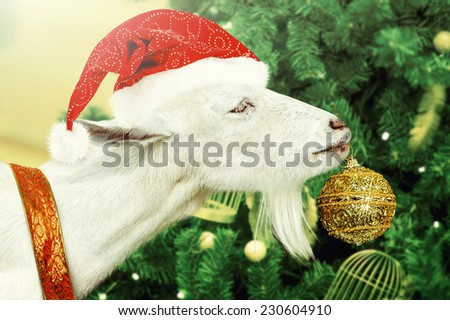 Young White goat wearing santa claus hat and ribbon decorates golden new years Toys green Christmas tree - stock photo