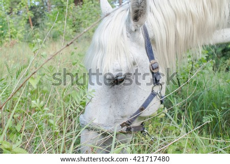 Young white horse grazing among the trees - stock photo