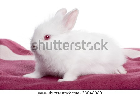 Young white Rabbit on a blanket (5 weeks old) in front of a white background - stock photo