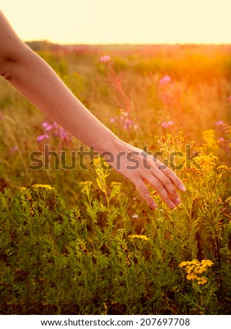 Young woman hand in field on sunset - stock photo