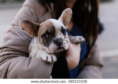 Young woman holding cute French bulldog puppy. Selective focus.
