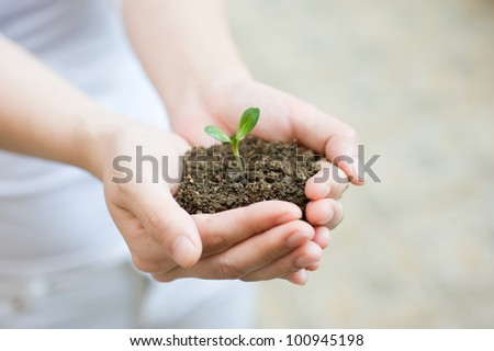 Young woman holding young plant in her hands. - stock photo