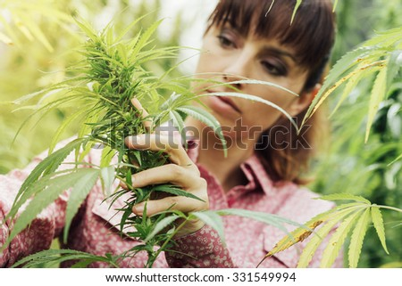 Young woman in a hemp field checking plants and flowers, agriculture and nature concept - stock photo