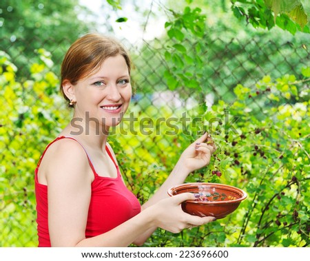 young woman in summer garden gathering berries - stock photo