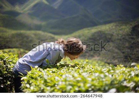 Young Woman on Tea Plantation Smelling Fresh Tea Leaves - stock photo