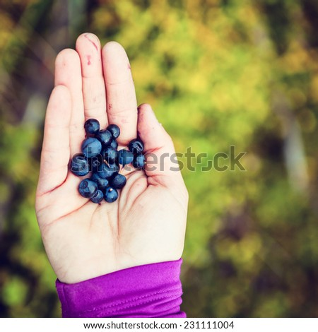 Young woman picking and hand giving blueberries over autumn fall forest background. Hiking and healthy lifestyle outdoors active in nature - stock photo