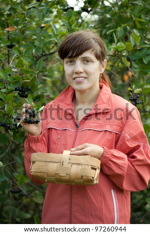 Young woman picking chokeberry in the plant - stock photo