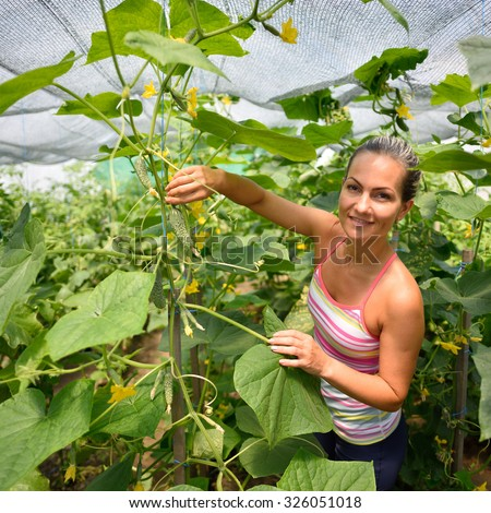 young woman picking fresh cucumbers in summer garden - stock photo