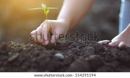 young woman planting a tree in the garden. Ecology concept