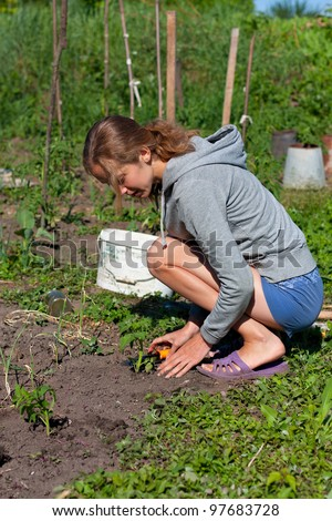Young Woman Planting Seedlings of tomatoes in the Garden. Homework in the garden