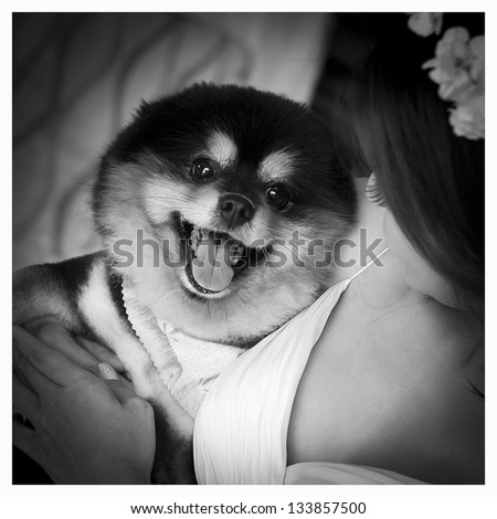 young woman playing with her tiny dog at home - stock photo