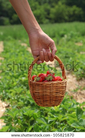 Young woman's hand with strawberries in basket - stock photo