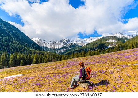 Young woman tourist sitting on mountain meadow with crocus flowers blooming, Chocholowska valley, Tatra Mountains, Poland