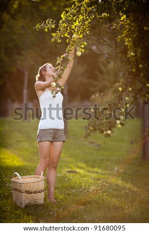 Apple Picking Stock Images Royalty Free Images Amp Vectors