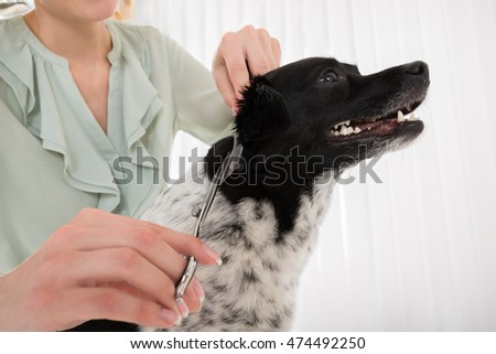 Young Woman Using Scissor And Comb For Cutting Hair Of Dog