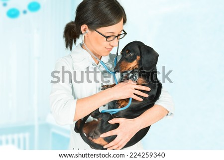 Young woman veterinarian is listening dachshund dog in hospital - stock photo