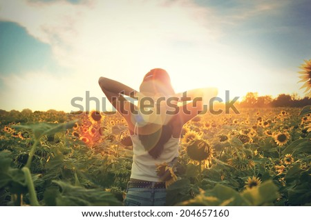 Young woman walking in the field with sunflowers - stock photo